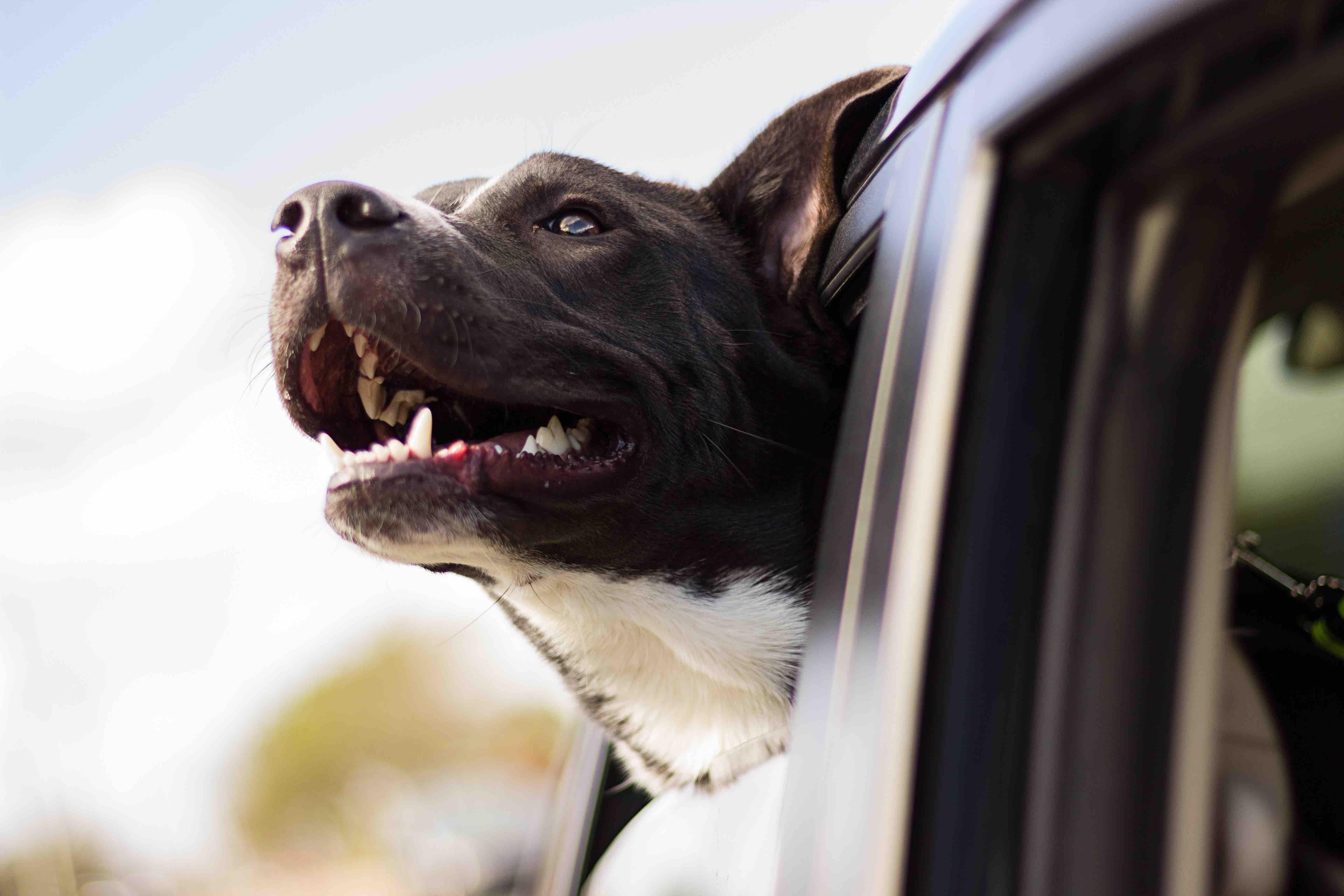 Kann man Tierwohl kaufen? - Unterschiede der Tierwohllabels